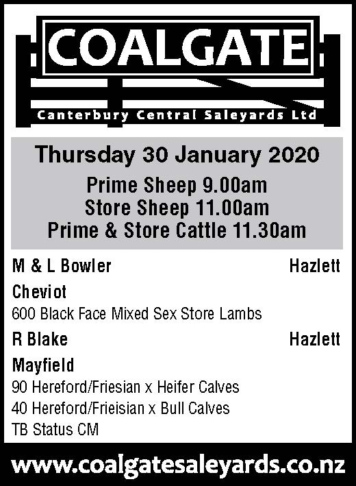 1 What's On Hazlett New zealand