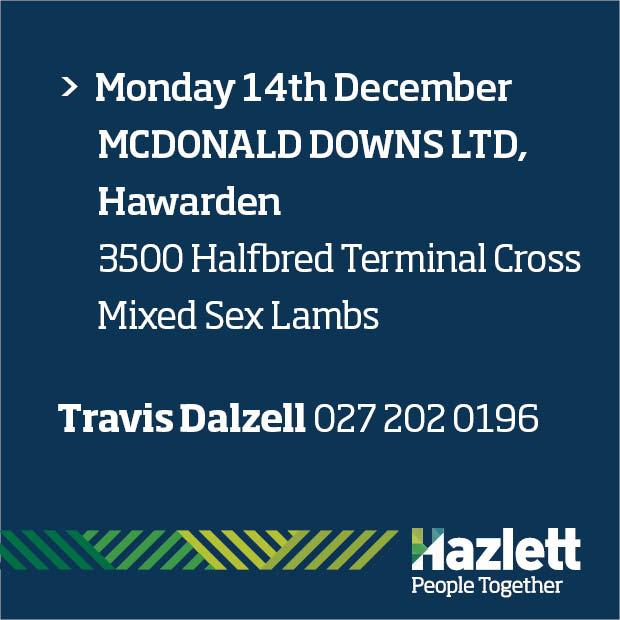 16 What's On Hazlett New zealand
